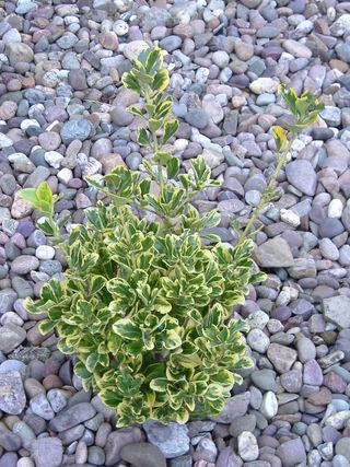 Plant.pebbles